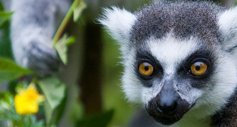 andasibe national park tour operator madagascar