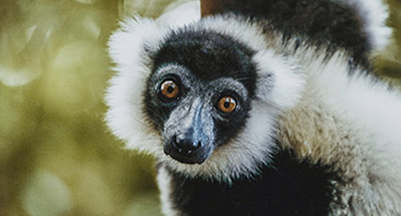 lemur-tour-operator-madagascar
